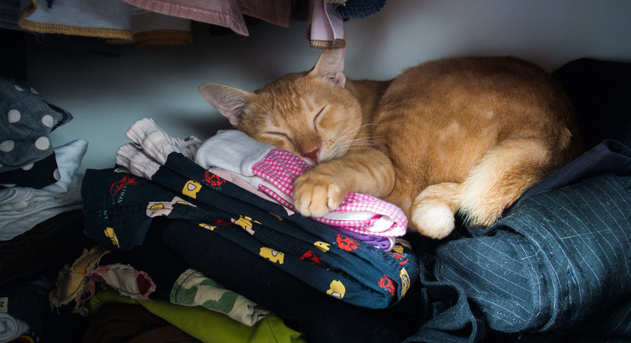 Как избавиться от неприятного запаха в шкафу с одеждой и обувью